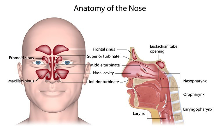 Sinusitis Pressure Relief In Linwood , NJ - Linwood Acupuncture Clinic